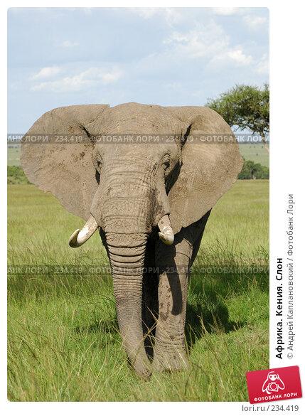 Африка. Кения. Слон, фото № 234419, снято 14 февраля 2005 г. (c) Андрей Каплановский / Фотобанк Лори