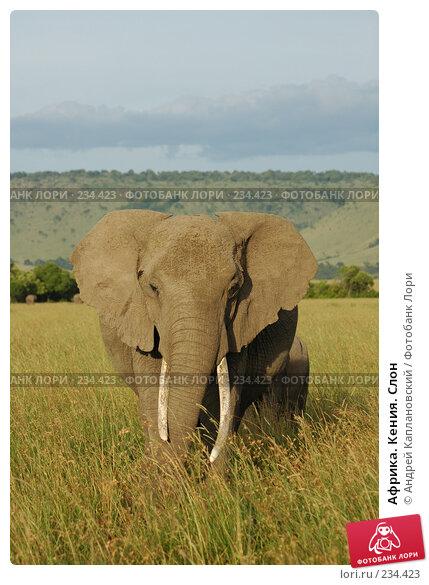 Африка. Кения. Слон, фото № 234423, снято 15 февраля 2005 г. (c) Андрей Каплановский / Фотобанк Лори