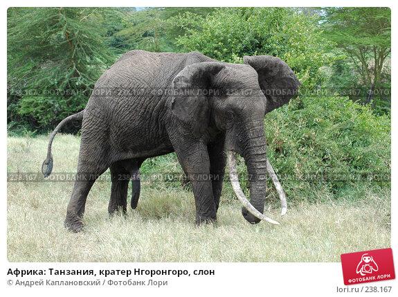 Африка: Танзания, кратер Нгоронгоро, слон, фото № 238167, снято 18 февраля 2005 г. (c) Андрей Каплановский / Фотобанк Лори