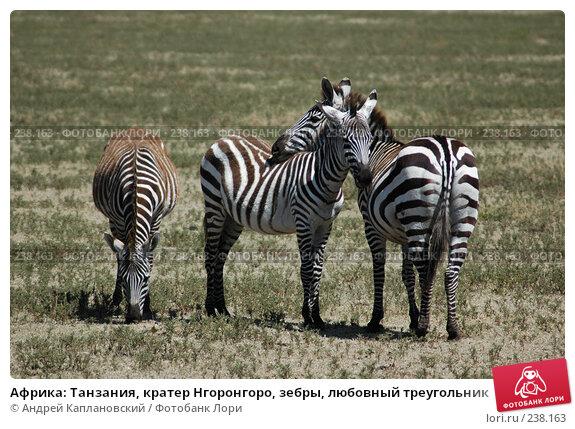 Африка: Танзания, кратер Нгоронгоро, зебры, любовный треугольник, фото № 238163, снято 18 февраля 2005 г. (c) Андрей Каплановский / Фотобанк Лори