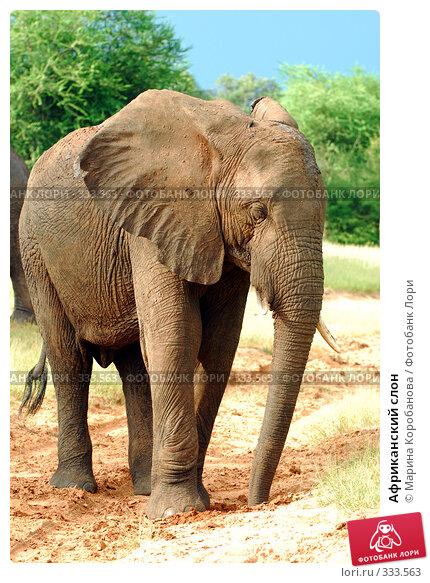 Африканский слон, фото № 333563, снято 18 февраля 2008 г. (c) Марина Коробанова / Фотобанк Лори