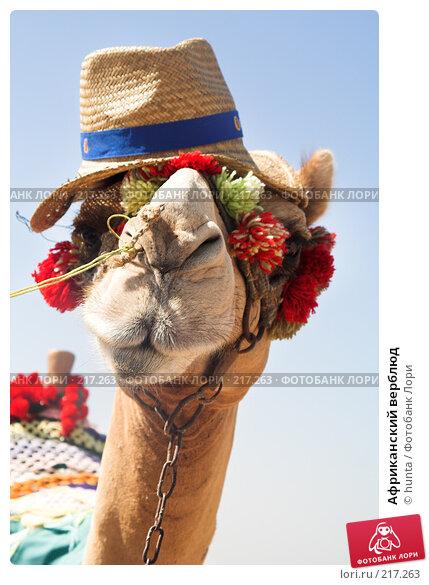Африканский верблюд, фото № 217263, снято 5 сентября 2007 г. (c) hunta / Фотобанк Лори