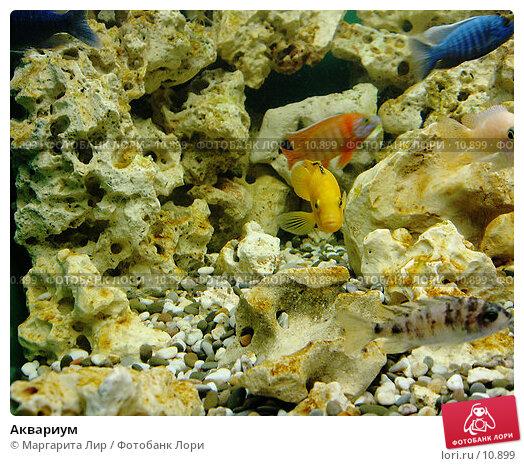 Аквариум, фото № 10899, снято 5 мая 2006 г. (c) Маргарита Лир / Фотобанк Лори