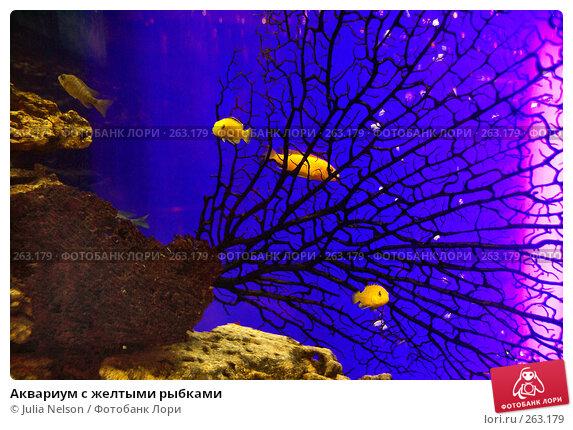 Купить «Аквариум с желтыми рыбками», фото № 263179, снято 20 апреля 2008 г. (c) Julia Nelson / Фотобанк Лори