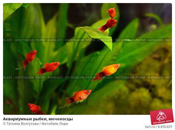 Энциклопедия аквариумных рыб  аквариум рыбки