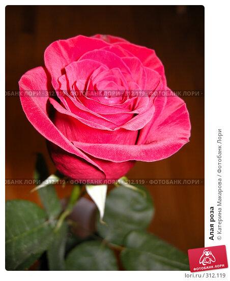 Алая роза, фото № 312119, снято 3 июня 2008 г. (c) Катерина Макарова / Фотобанк Лори