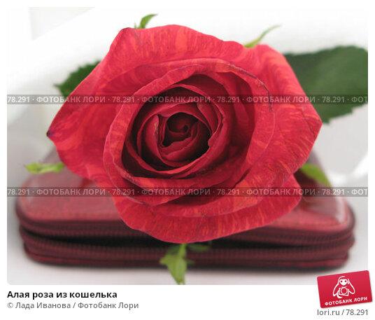 Алая роза из кошелька, фото № 78291, снято 1 сентября 2007 г. (c) Лада Иванова / Фотобанк Лори