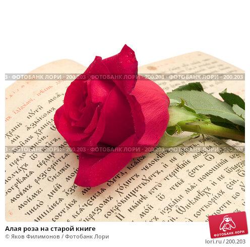 Алая роза на старой книге, фото № 200203, снято 8 февраля 2008 г. (c) Яков Филимонов / Фотобанк Лори