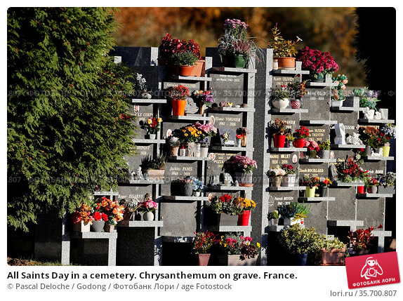 All Saints Day in a cemetery. Chrysanthemum on grave. France. Стоковое фото, фотограф Pascal Deloche / Godong / age Fotostock / Фотобанк Лори