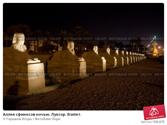 Купить «Аллея сфинксов ночью. Луксор. Египет.», эксклюзивное фото № 336675, снято 11 декабря 2007 г. (c) Горшков Игорь / Фотобанк Лори