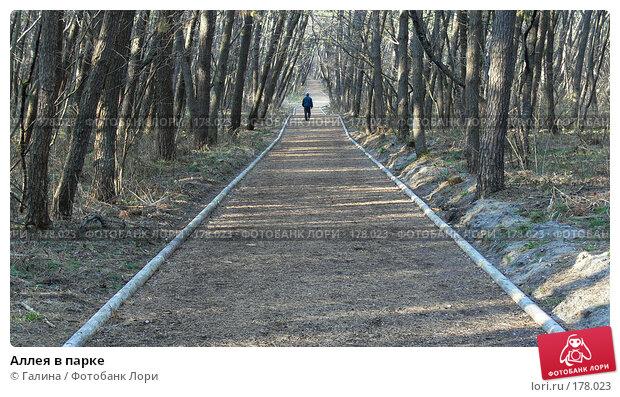 Аллея в парке, фото № 178023, снято 11 апреля 2007 г. (c) Галина Щеглова / Фотобанк Лори