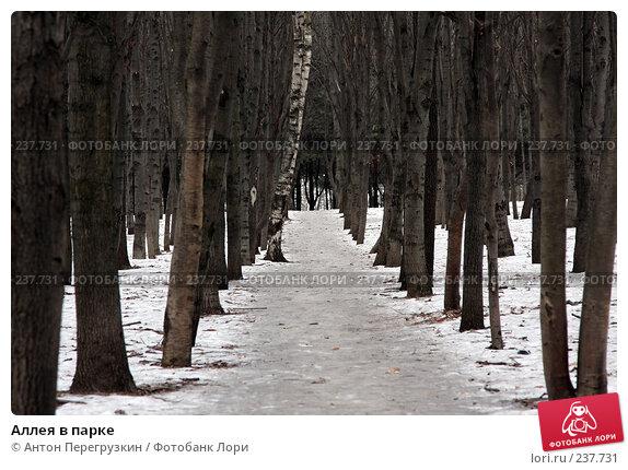 Аллея в парке, фото № 237731, снято 19 января 2008 г. (c) Антон Перегрузкин / Фотобанк Лори