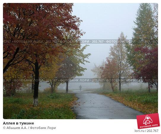 Аллея в тумане, фото № 202767, снято 1 октября 2006 г. (c) Абышев А.А. / Фотобанк Лори