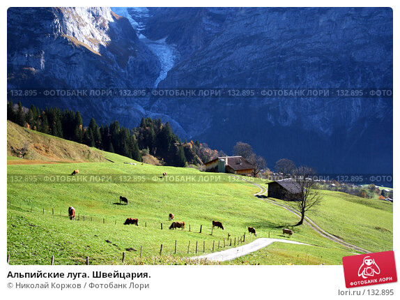 Альпийские луга. Швейцария., фото № 132895, снято 29 сентября 2006 г. (c) Николай Коржов / Фотобанк Лори