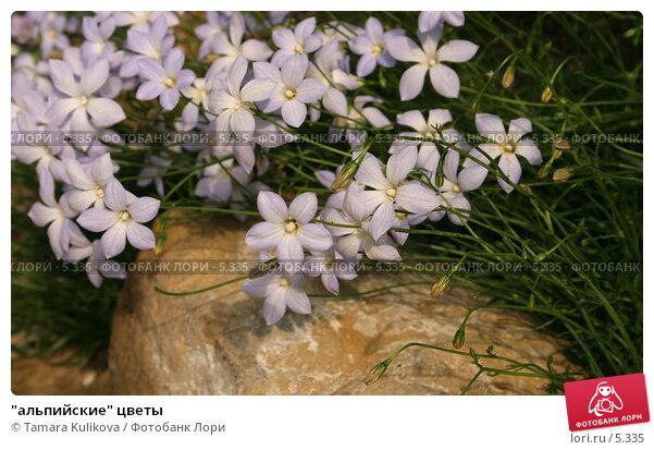 """""""альпийские"""" цветы, фото № 5335, снято 1 июля 2006 г. (c) Tamara Kulikova / Фотобанк Лори"""