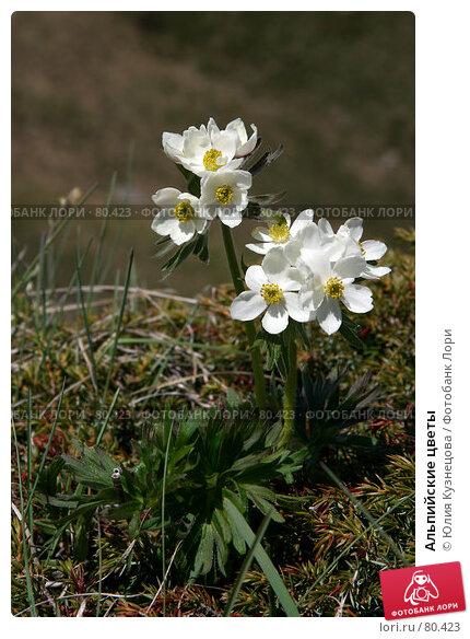 Альпийские цветы, фото № 80423, снято 17 июня 2007 г. (c) Юлия Кузнецова / Фотобанк Лори