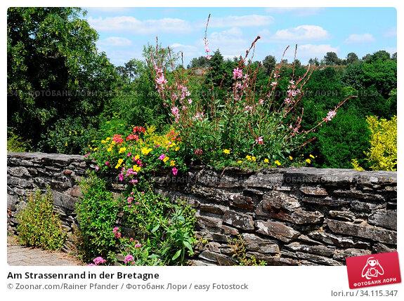 Купить «Am Strassenrand in der Bretagne», фото № 34115347, снято 11 июля 2020 г. (c) easy Fotostock / Фотобанк Лори