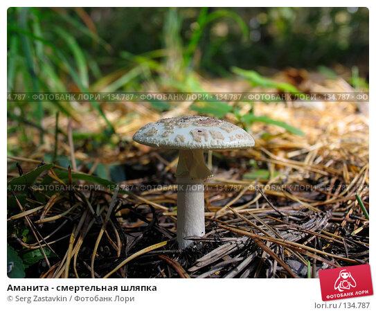 Аманита - смертельная шляпка, фото № 134787, снято 16 сентября 2004 г. (c) Serg Zastavkin / Фотобанк Лори