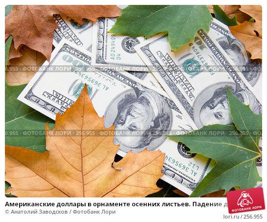 Американские доллары в орнаменте осенних листьев. Падение доллара, фото № 256955, снято 25 сентября 2007 г. (c) Анатолий Заводсков / Фотобанк Лори
