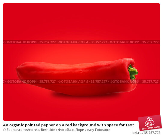 An organic pointed pepper on a red background with space for text. Стоковое фото, фотограф Zoonar.com/Andreas Berheide / easy Fotostock / Фотобанк Лори