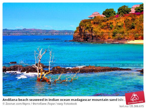 Andilana beach seaweed in indian ocean madagascar mountain sand isle... Стоковое фото, фотограф Zoonar.com/lkpro / easy Fotostock / Фотобанк Лори