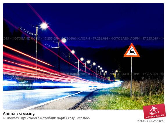 Купить «Animals crossing», фото № 17255099, снято 24 февраля 2020 г. (c) easy Fotostock / Фотобанк Лори