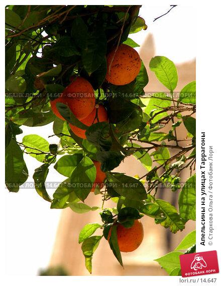 Купить «Апельсины на улицах Таррагоны», фото № 14647, снято 18 июня 2006 г. (c) Старкова Ольга / Фотобанк Лори