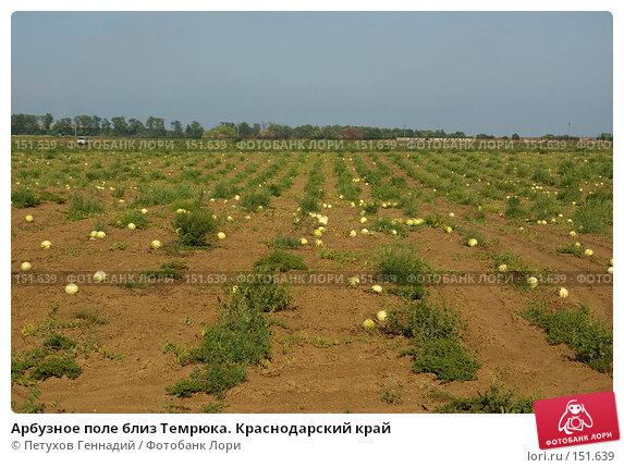 Арбузное поле близ Темрюка. Краснодарский край, фото № 151639, снято 9 августа 2007 г. (c) Петухов Геннадий / Фотобанк Лори
