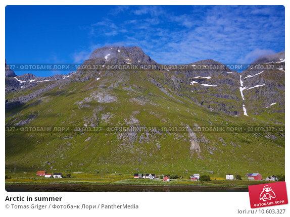 Arctic in summer. Стоковое фото, фотограф Tomas Griger / PantherMedia / Фотобанк Лори