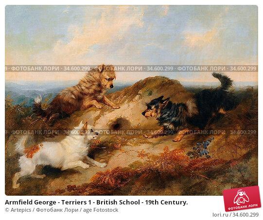 Armfield George - Terriers 1 - British School - 19th Century. Стоковое фото, фотограф Artepics / age Fotostock / Фотобанк Лори