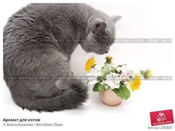 Аромат для котов, фото № 278827, снято 8 мая 2008 г. (c) Алина Акимова / Фотобанк Лори