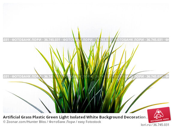 Artificial Grass Plastic Green Light Isolated White Background Decoration... Стоковое фото, фотограф Zoonar.com/Hunter Bliss / easy Fotostock / Фотобанк Лори