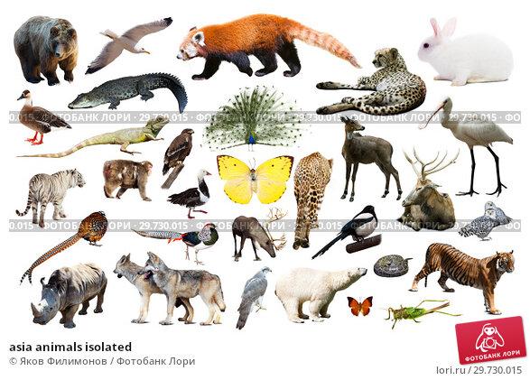 Купить «asia animals isolated», фото № 29730015, снято 20 марта 2019 г. (c) Яков Филимонов / Фотобанк Лори