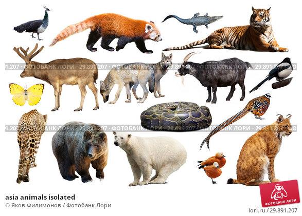 Купить «asia animals isolated», фото № 29891207, снято 25 марта 2019 г. (c) Яков Филимонов / Фотобанк Лори
