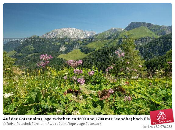 Auf der Gotzenalm (Lage zwischen ca 1600 und 1700 mtr Seehöhe) hoch über dem Königsee - im Gebiet des Nationalparkes Berchtesgadener Land. Стоковое фото, фотограф RoHa-Fotothek Fürmann / age Fotostock / Фотобанк Лори