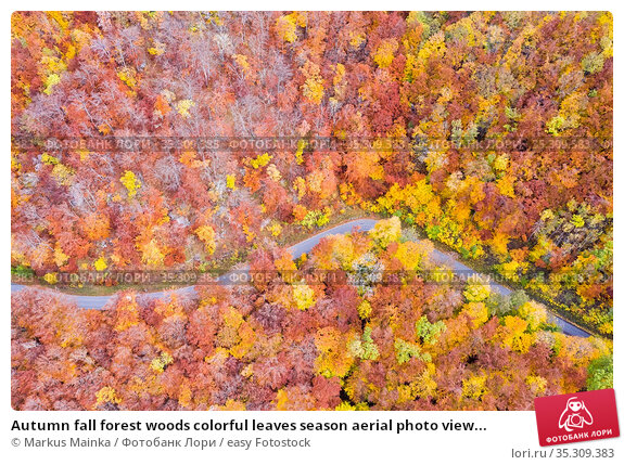 Autumn fall forest woods colorful leaves season aerial photo view... Стоковое фото, фотограф Markus Mainka / easy Fotostock / Фотобанк Лори