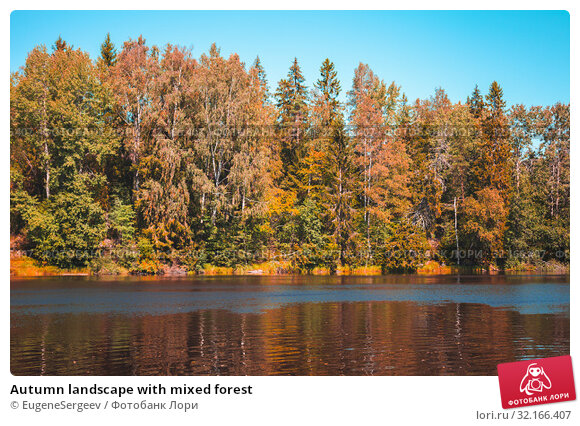Купить «Autumn landscape with mixed forest», фото № 32166407, снято 17 августа 2019 г. (c) EugeneSergeev / Фотобанк Лори