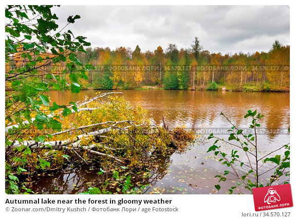 Autumnal lake near the forest in gloomy weather. Стоковое фото, фотограф Zoonar.com/Dmitry Kushch / age Fotostock / Фотобанк Лори