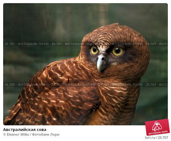 Австралийская сова, фото № 29707, снято 15 апреля 2007 г. (c) Eleanor Wilks / Фотобанк Лори