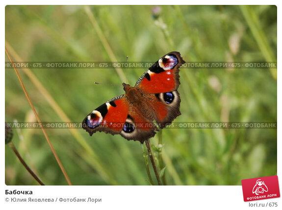 Бабочка , фото № 675, снято 4 августа 2005 г. (c) Юлия Яковлева / Фотобанк Лори