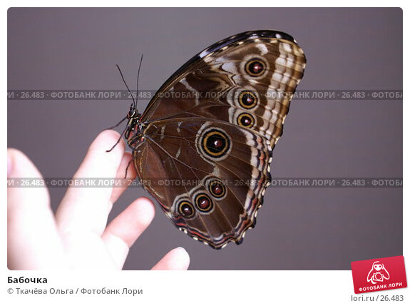 Бабочка, фото № 26483, снято 2 ноября 2006 г. (c) Ткачёва Ольга / Фотобанк Лори