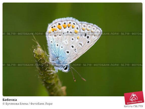 Бабочка, фото № 56719, снято 30 июня 2007 г. (c) Бутинова Елена / Фотобанк Лори