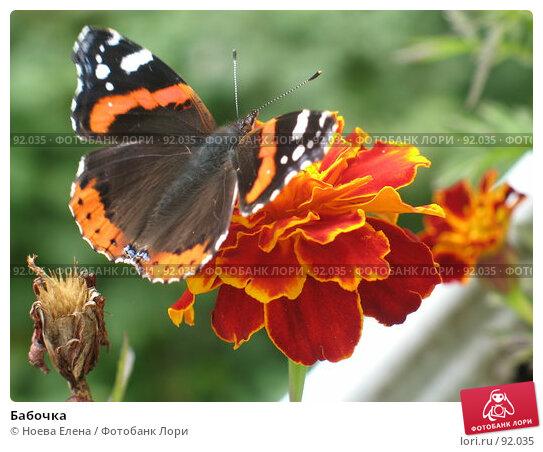 Бабочка, фото № 92035, снято 9 сентября 2007 г. (c) Ноева Елена / Фотобанк Лори