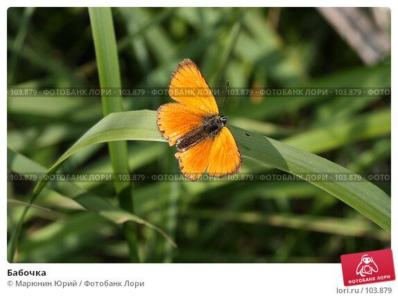 Бабочка, фото № 103879, снято 28 октября 2016 г. (c) Марюнин Юрий / Фотобанк Лори