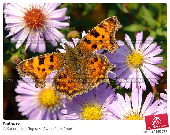 Бабочка, фото № 145735, снято 26 октября 2016 г. (c) Константин Порядин / Фотобанк Лори