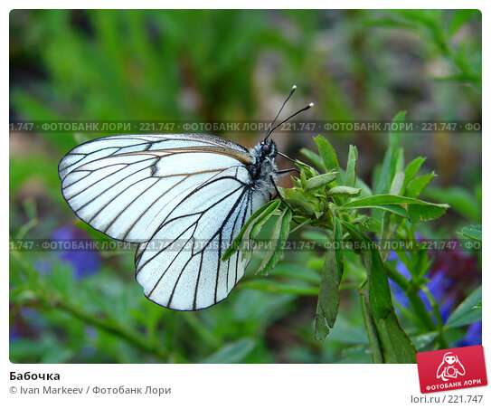 Бабочка, фото № 221747, снято 16 июня 2007 г. (c) Василий Каргандюм / Фотобанк Лори