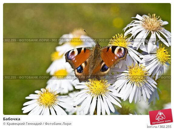 Бабочка, фото № 302255, снято 8 октября 2006 г. (c) Кравецкий Геннадий / Фотобанк Лори