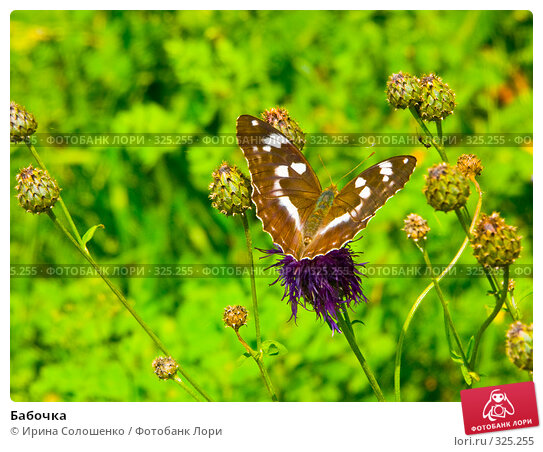 Бабочка, фото № 325255, снято 23 июля 2006 г. (c) Ирина Солошенко / Фотобанк Лори