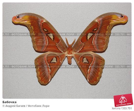 Бабочка, фото № 333751, снято 27 февраля 2008 г. (c) Андрей Багаев / Фотобанк Лори