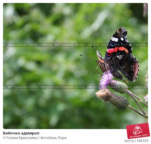 Бабочка адмирал, фото № 149519, снято 28 июля 2006 г. (c) Галина Ермолаева / Фотобанк Лори